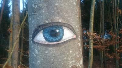 ABGESAGT - Unser tglich Wald gib uns heute!
