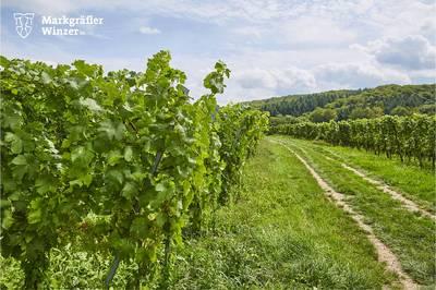 Weinwanderung durch die Reben