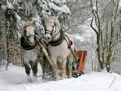 Romantik und Winterwald  Pferdekutschenfahrt am Fuße des Feldbergs