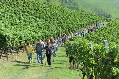 Kulinarische Weinwanderung in Oberkirch