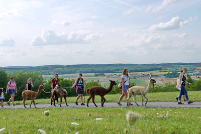 Alpakawanderung am Helenenhof im  Bliesgau. (© Saarpfalz-Touristik, Wolfgang Henn)