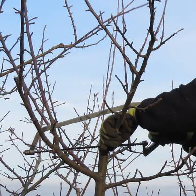 Baumschnittkurs des OGV Lichtenstein