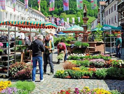 Wochenmarkt in Wolfach. (© Stadt Wolfach)