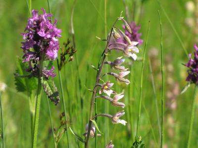 Moore- und Orchideen-Exkursion