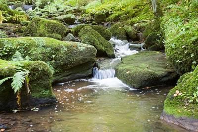Abgesagt             Wasser, Wald und Bäume - Wanderung vom Quellhorizont ins Murgtal