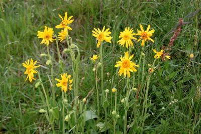 !!! A B G E S A G T !!! Blumen- und Kräuterwanderung am Schauinsland