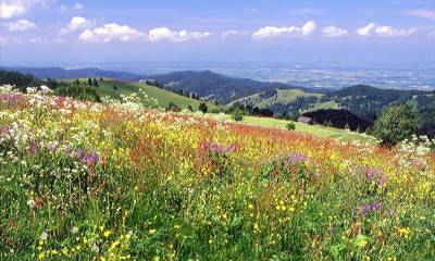 Blumen- und Kräuterwanderung am Schauinsland