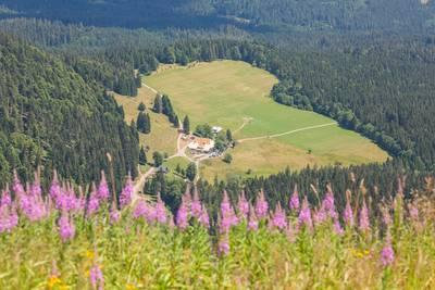 Blick vom Bismarckdenkmal zum Raimartihof. (© Hochschwarzwald Tourismus GmbH)