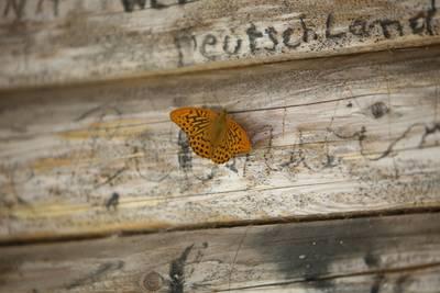 Schmetterling. (© Hochschwarzwald Tourismus GmbH)