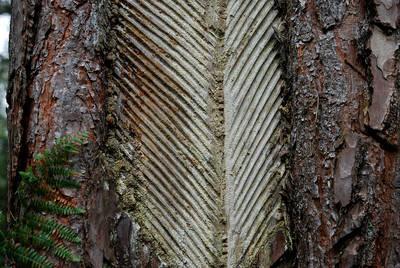Harzgeschichten - von Bäumen mit Harzen und was man daraus machen kann