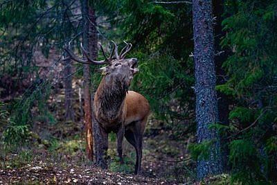 Sonderausstellung Wild & Jagd