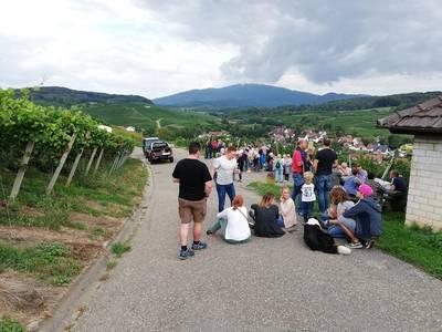 Sommerliche Weinwanderung mit Weingut Sommerhalter
