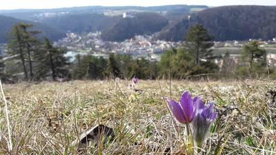 Frühling über der Dreiburgenstadt - Wanderung
