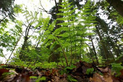 ABGESAGT - Baden in der Waldluft
