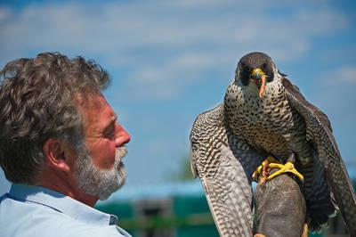 Greifvogelflugshow. (© Herr Ruchlak)
