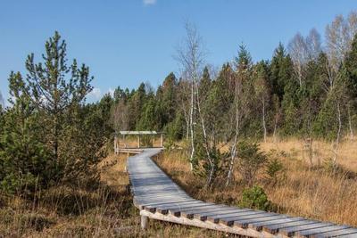 Baaz und Zeit gibt Moor - Moore im geheimnisvollen Prentenwald