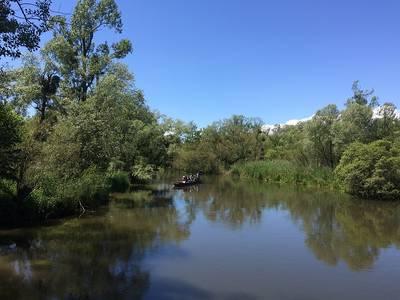 Der Urwald am Rhein - geführte Bootsfahrt im Naturschutzgebiet Taubergießen. (©  Dr. Jochen Schwendemann, ab durchs ländle)