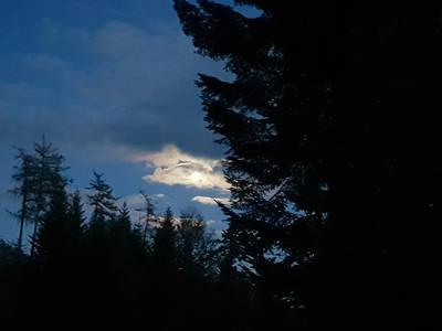 Erfahren Sie die Geborgenheit und Ruhe des schlafenden Waldes. (© Monika Amann)