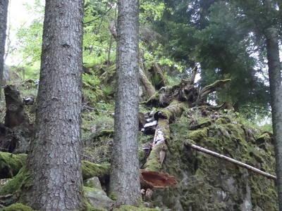 Auf dem Weg zum Urwald - Bannwald Schwarzahalden