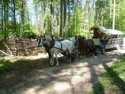 Planwagenfahrt durch den Reinhardswald