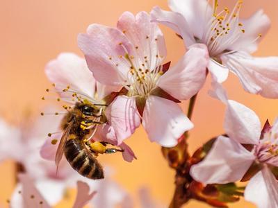 Werkelzwerge: Bienenwerkstatt in Ilanz