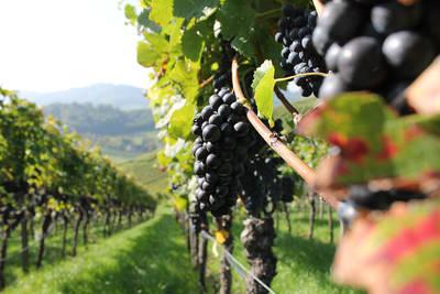 Auf ein Gläschen Wein: Ein Hoch auf die Ortenau