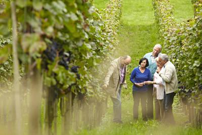 Gemütliche Wanderung: Bei der Weinlese