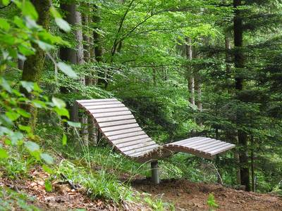 Wandern und Waldbaden
