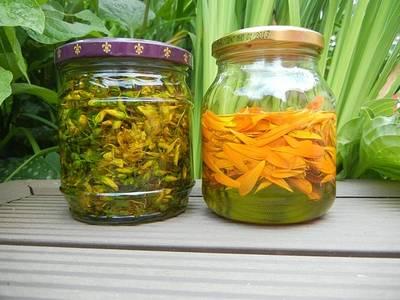 Für kleine Druiden: Kräuteröle und Salben aus Zauberkräutern