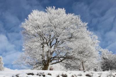Tour zu den Wetterbuchen am Schauinsland - bei Schnee mit Schneeschuhen
