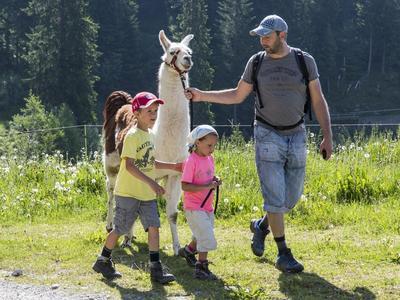 Ausflug mit Lamas - das tierische Abenteuer in Brigels