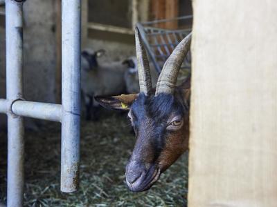 Kinderprogramm: Tierisches Erlebnis in Brigels