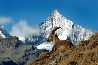 Film Screening Zermatt Fauna & Flora