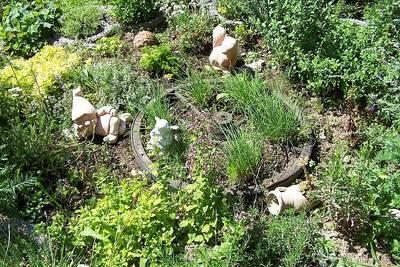 Bauernhof- und Wildkräuterbrunch