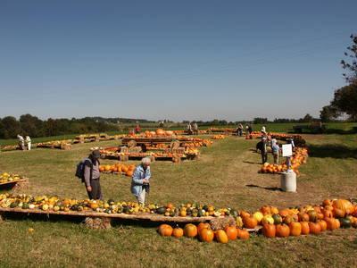 Bild Herbstmarkt beim Bauernmarkt