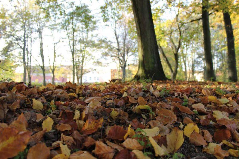 Herbstbasar in Hattstedt. © Tourismus und Stadtmarketing Husum GmbH