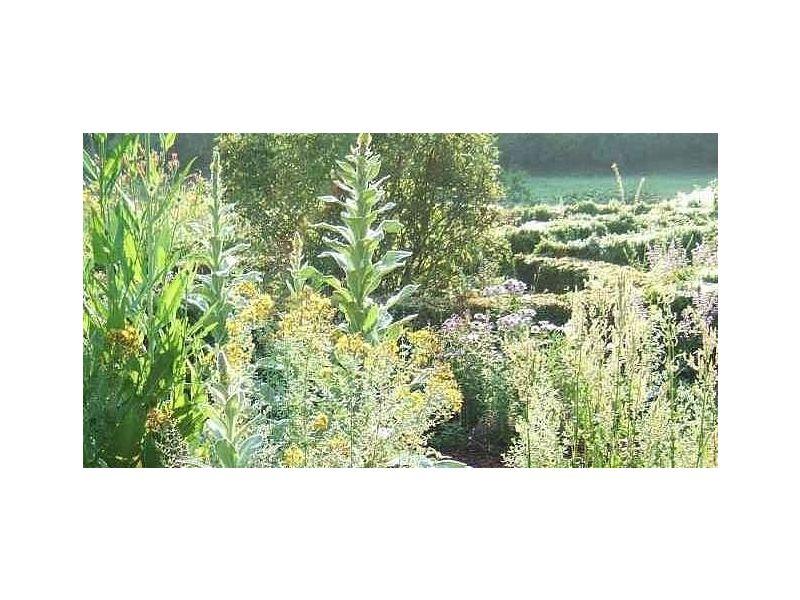 Forum Naturbegegnung - Heilpflanzenerkenntnis im Spiegel der Planetenkräfte